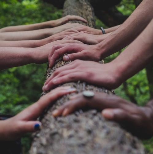 Bête à bois - Jura Solidaire