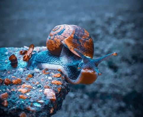 Bête à bois - escargot accueil